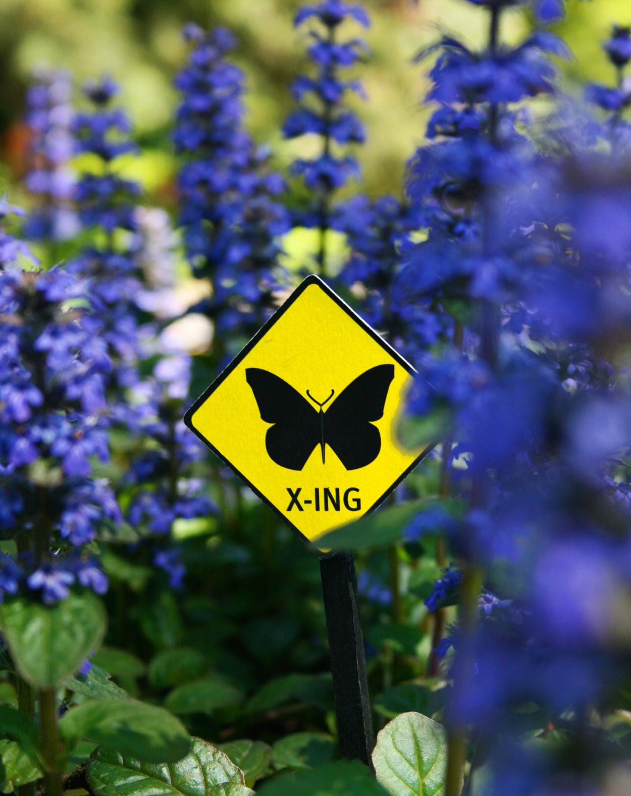PollinatorPathway_StudioMatthews_05.jpeg
